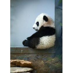 Mobile  'Les pandas'